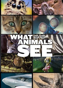 What Animals See